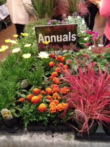 Annuals Display at herb festival